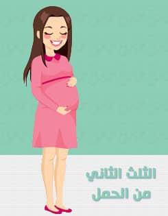 اسابيع الثلث الثاني من الحمل