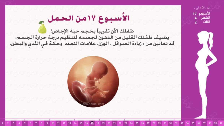 الأسبوع 17 من الحمل