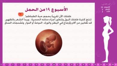 Photo of الأسبوع 19 من الحمل : إرشادات وحقائق