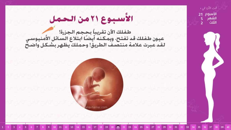 الأسبوع 21 من الحمل