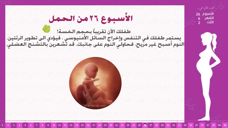 الأسبوع 26 من الحمل