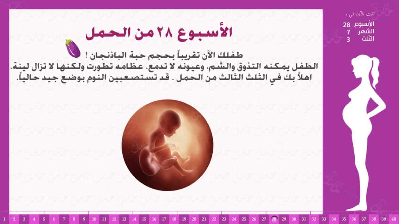 الأسبوع 28 من الحمل