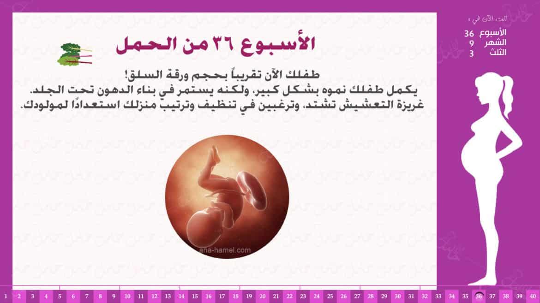 الأسبوع 36 من الحمل