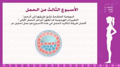 Photo of الأسبوع الثالث من الحمل : إرشادات وحقائق