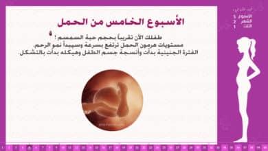 Photo of الأسبوع الخامس من الحمل : إرشادات وحقائق