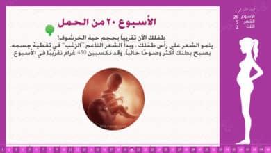 Photo of الأسبوع 20 من الحمل : إرشادات وحقائق