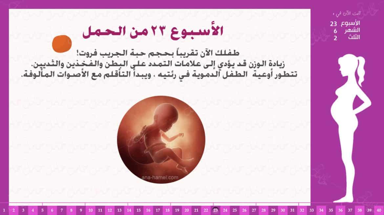 الأسبوع 23 من الحمل