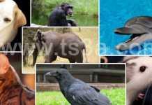ذكاء الحيوانات - تسعة حقائق - الذكاء الحيواني