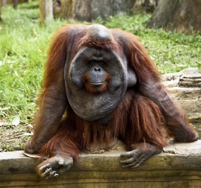 هل تعلم ما هي نظرية التطور؟