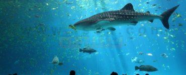 سمكة القرش والزهايمر
