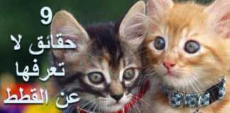 معلومات عن القطط تسعة 9 حقائق لا تعرفها عن القطط