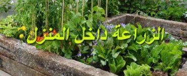 الزراعة داخل المنزل