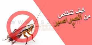 القضاء على الصراصير التخلص من الصراصير