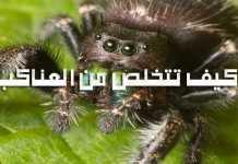 حقائق عن العناكب وكيف تتخلص من العناكب