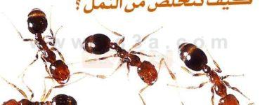 طرق مكافحة النمل والتخلص من النمل
