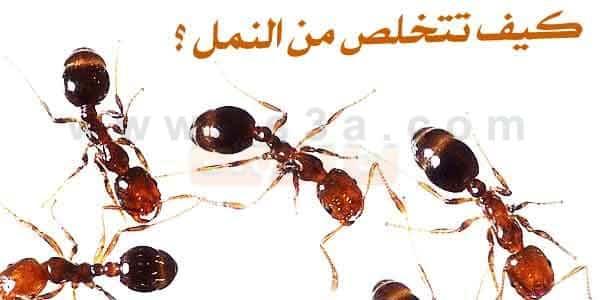 Image result for مكافحهالنمل