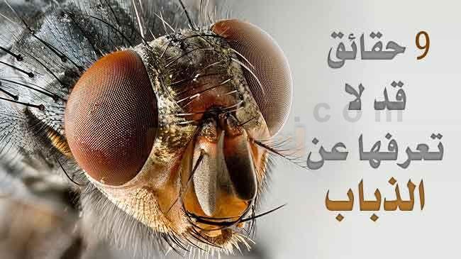 معلومات عن الذباب تسع (9) حقائق قد لا تعرفها عن الذباب