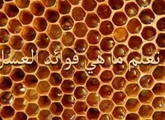 فوائد العسل انواع العسل مشتقات العسل
