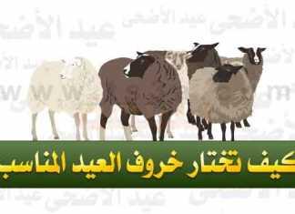 كيف تختار خروف العيد المناسب ؟