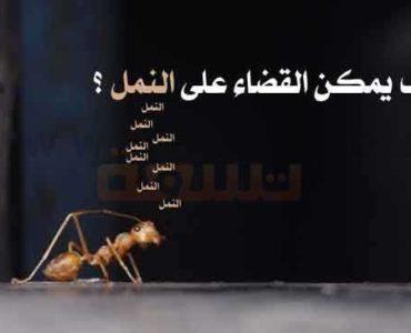 القضاء على النمل التخلص من النمل