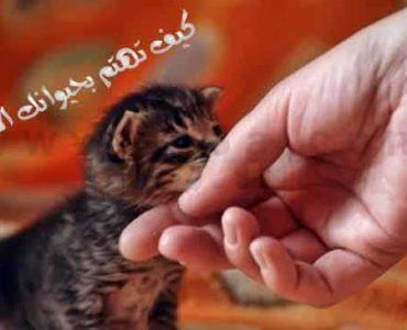 الحيوانات الأليفة حيوان أليف كيف تهتم بحيوانك الأليف