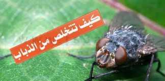 معلومات عن الذباب التخلص من الذباب