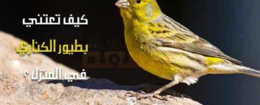 نصائح طيور الكناري طائر الكناري العناية في المنزل