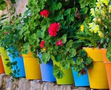 تعرف على افضل النباتات المنزلية وفوائد النباتات داخل المنزل