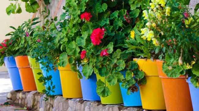 قلق الجهاز الهضمي البلد التي تنتمي لها ديكورات نباتات الزينة المنزلية Loudounhorseassociation Org