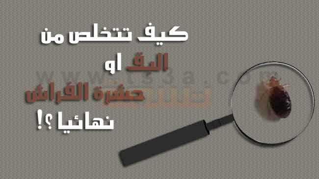 شركة مكافحة بق الفراش بمكة ( 01001557975 للايجار ) أفضل شركة رش البق بأرخص  الاسعار