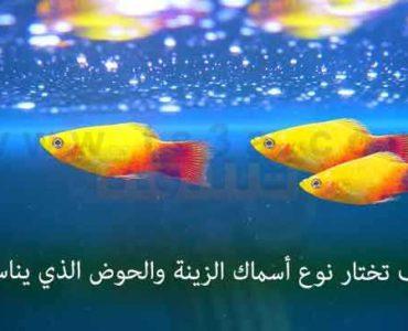 كيف تختار نوع أسماك الزينة حوض الاسماك