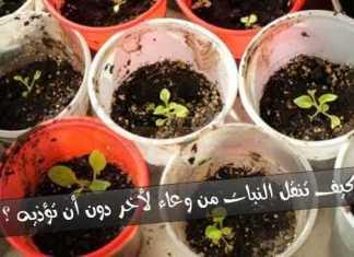 خطوات نقل النبات من وعاء لأخر