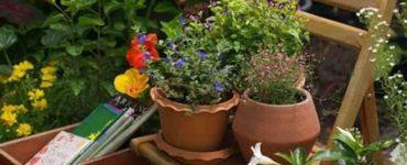 زراعة حديقة منزلية تصميم حدائق منزلية حديقتك الخاصة