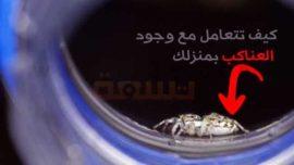 كيف تتعامل مع وجود العناكب بمنزلك