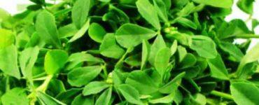كيف تعدين نبات الحلبة بطرق مختلفة