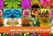 كيف تقوم بزراعة الأزهار في حديقتك