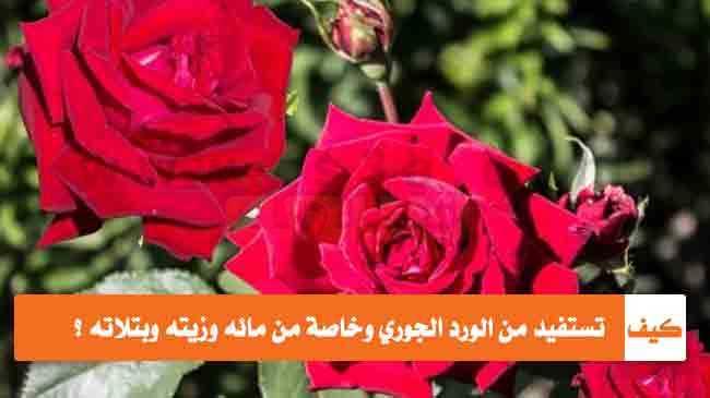 كيف تستفيد من الورد الجوري