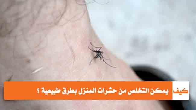 التخلص من حشرات المنزل بطرق طبيعية