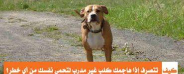 كيف تتصرف إذا هاجمك كلب غير مدرب