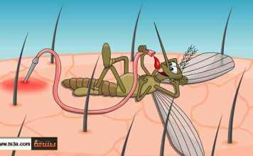 تسع حقائق عن حشرة البعوض