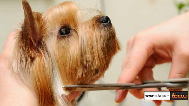 كيف تتخلص من تساقط شعر الحيوان الأليف