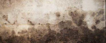 كيف تتخلص من فطر العفن الأسود