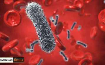 كيف تتعامل مع مرض السلمونيلا