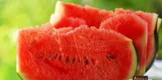 ثمرة بطيخ ناضجة البطيخ الناضج
