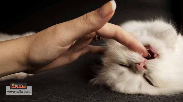 عدوانية القطط