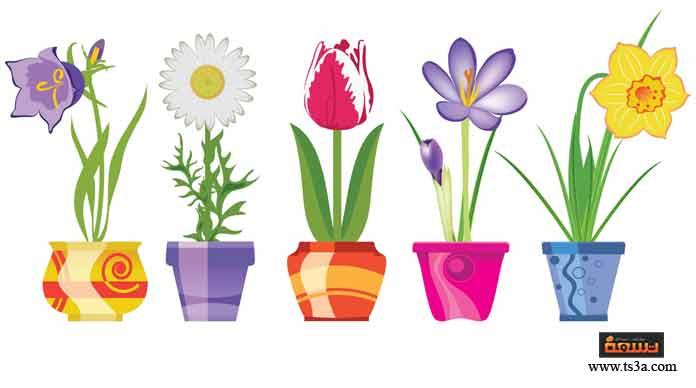 كل الورود هي زهور.... بعض الزهور تذبل بسرعة ... لذلك بعض الورود تذبل بسرعة.