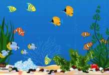 حماية أسماك الزينة من الموت