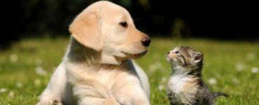 اختيار بين القطط والكلاب