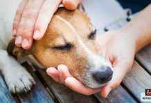 المحافظة على الحيوان الأليف