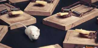 كيف تتخلص من وجود الفئران في المنزل